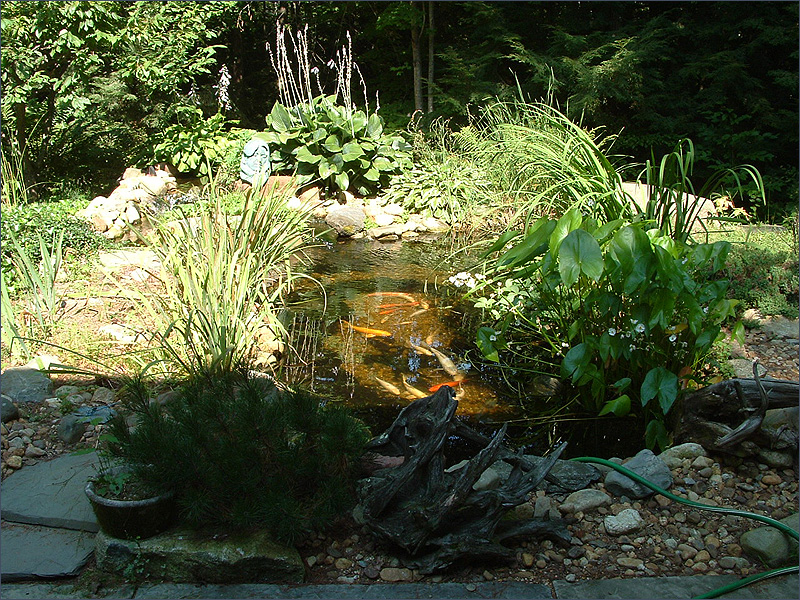 Japanese garden koi pond for the garden pinterest koi for Koi pool water gardens blackpool