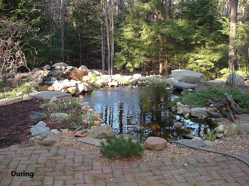 Koi Pond, Newfields, NH